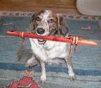 flute dog